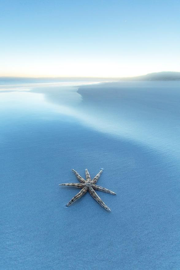 Starfish Australia