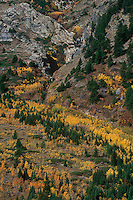 749450438 fall colored aspens decorate a steep hillside covered in fir trees and boulder formations in lupine meadows grand tetons national park wyoming