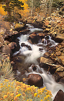 742900142 fall color lines rock creek a mountain stream in the eastern sierras in mono county california