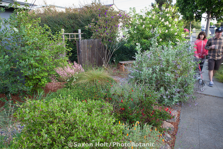 Couple walking along sidewalk by urban front yard with California native plants, Heath-Delaney garden