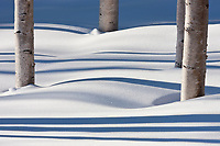 Shadows across fresh fallen snow, birch trees, boreal forest, Fairbanks, Alaska