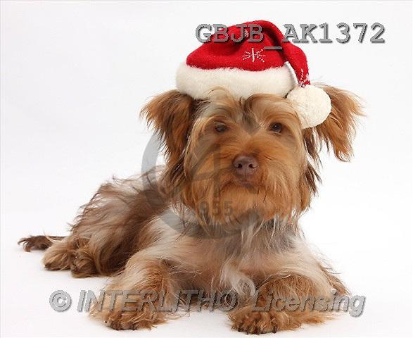 Kim, CHRISTMAS ANIMALS, photos(GBJBAK1372,#XA#) stickers