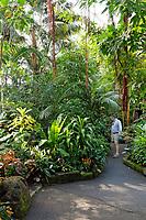 Man in the Bloedel Conservatory in Queen Elizabeth Park, Vancouver, BC, Canada