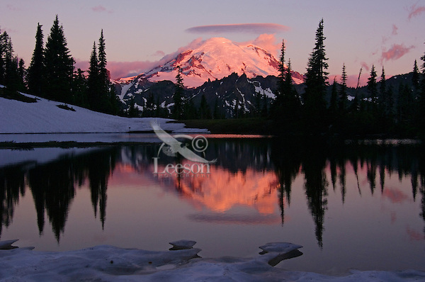 Mount Rainier reflecting in subalpine pond.  Mount Rainier National Park, July, sunrise.