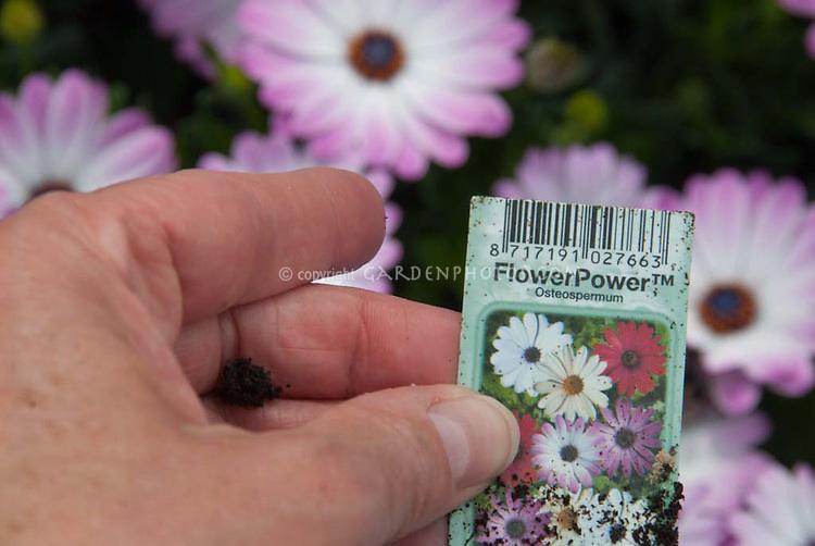 Plant label of FlowerPower Osteospermum in hand with flowers blurred behind, trademark symbol