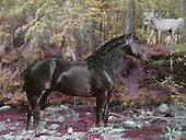 Bob, ANIMALS, collage, horses, photos(GBLA629,#A#) Pferde, caballos