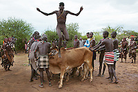 Ethiopia. Southern Nations, Nationalities, and Peoples' Region. Omo Valley. Turmi. Hamar tribe (also spelled Hamer). Pastoralist group. Traditional cattle jumping ceremony. A Hamar man comes of age by leaping over a line of cattle. The bull jumping ceremony is one of the most important in man's life and once completed allows him to marry, own cattle and have children. The ceremony is about hierarchy and tribe's membership. The young man who is to leap has his head parially shaved and he's rubbed with sand to wash away his sins. He's then smeared with dung to give him strength while strips of tree bark are strapped around his naked body in a cross as a form of spiritual protection. The elders line up between six, like in the picture, and up to twenty cows and castrated male cattle (depending on family's wealth). The young man underwent a number of rituals before he leaps onto and runs rapidly over a series of cattle held by other men. To come of age, the man must leap across the line a minimum of four times. Only when, without falling, he has been through his initiation rite can he marry the wife chosen for him by his family, and start to build up his own herd. The Omo Valley, situated in Africa's Great Rift Valley, is home to an estimated 200,000 indigenous peoples who have lived there for millennia. Amongst them are 60'000 to 70'000 Hamar, an Omotic community inhabiting southwestern Ethiopia. They live in Hamer woreda (or district), a fertile part of the Omo River valley, in the Debub Omo Zone of the Southern Nations, Nationalities, and Peoples Region (often abbreviated as SNNPR) which is one of the nine ethnic divisions of Ethiopia. 9.11.15 © 2015 Didier Ruef
