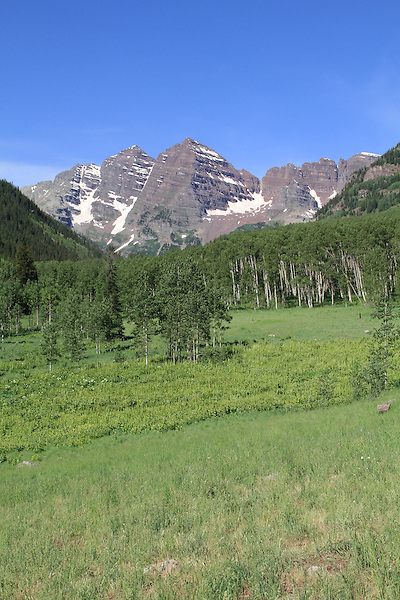 The Maroon Bells Peaks in summer, Aspen, Colorado .  John offers private wildflower tours in the Crested Butte area and throughout Colorado. Year-round.
