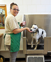 FAO JANET TOMLINSON, DAILY MAIL PICTURE DESK<br /> Pictured: A dog is given a bath Monday 14 November 2016<br /> Re: The Dog House in the village of Talog, Carmarthenshire, Wales, UK