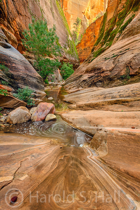 This is part of the trail to one of the more difficult hikes in all of Zion National Park, Observation Point.  After a series of initial switchbacks, a welcomed cool canyon and stream crossing is encountered.  Beautiful, cool sandstone walls before encountering the next leg up in this eight mile hike.