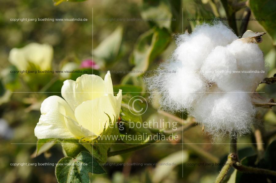 INDIEN Madhya Pradesh Khargone , Kooperative Shiv Krishi Utthan Sanstha vermarktet fairtrade und Biobaumwolle, wird verarbeitet fuer armed angels, C&A und andere / INDIA Madhya Pradesh Khargone , farmer of cooperative Shiv Krishi Utthan Sanstha produce fairtrade and organic cotton
