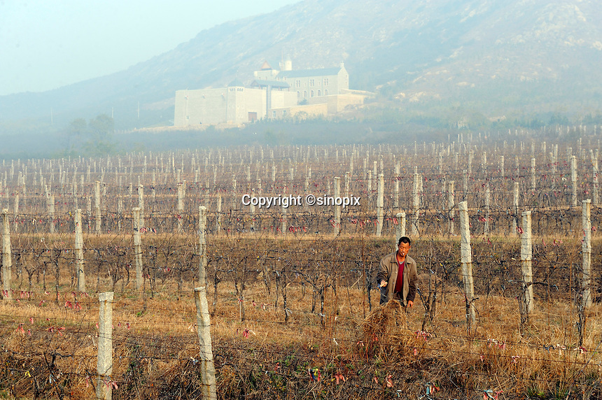 A man mowing in front of a Scottish Castle on the site of Treaty Port Vineyards which is run by British milllionaire Chris Ruffle in Penglai, Shandong province. 06-Nov-2010
