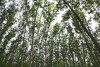 FOREST_LOCATION_90141