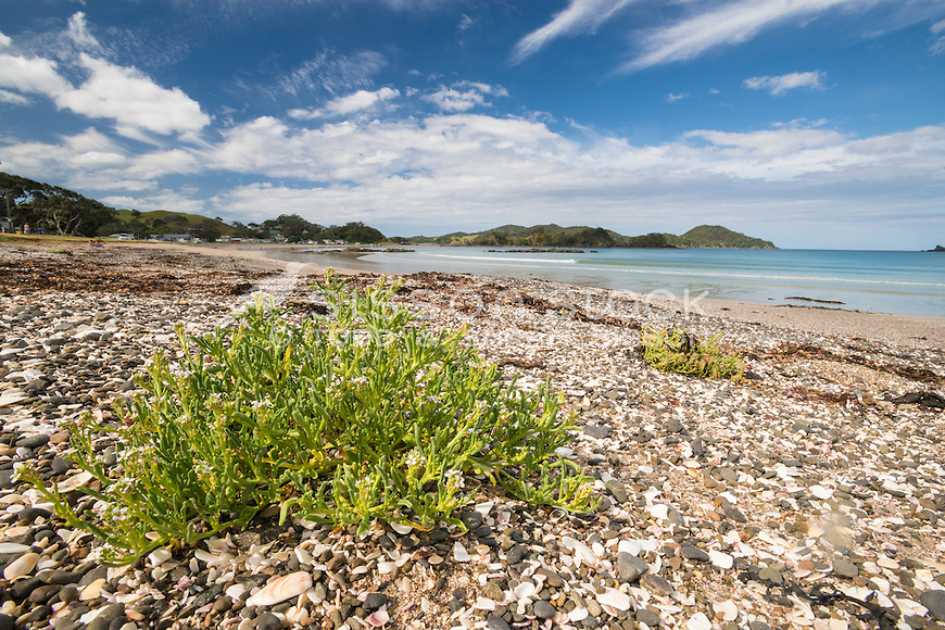 Oakura Bay in Northland, New Zealand, Beach in summer - stock photo, canvas, fine art print