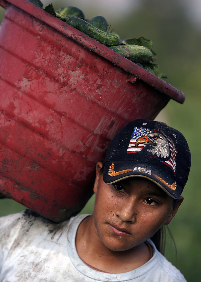LABOR3.NE.060807.EDR.JPG  Mariana Perez, 19, an undocumented worker from Veracruz, Mexico, harvests cucumbers in Edgecombe County on Friday, June 8, 2007.  Staff photo by Ted Richardson/News & Observer...