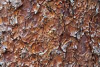 Bark detail, Sneffels Wilderness, Colorado<br /> <br /> Canon EOS 5D, 70-200 f/2.8L lens