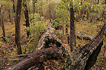 Jarrah forest in Serpentine, Western Australia