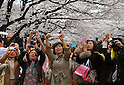 April 6, 2012, Tokyo, Japan - Shutter-happy viewers take pictures of cherry blossoms at Tokyos Ueno Park on Friday, April 6, 2012. It's springtime in Tokyo and time to stop and appreciate fragile pale pink blossoms in full bloom all over the nation's capital. Last year, Japan's most popular national passtime was somewhat muted due to the March 11 earthquake and tsunami. But this year, the centuries-old tradition has come back with revelers eager to use the occasion as a way to break from a year marked by the crisis and disaster. (Photo by Natsuki Sakai/AFLO) AYF -mis-