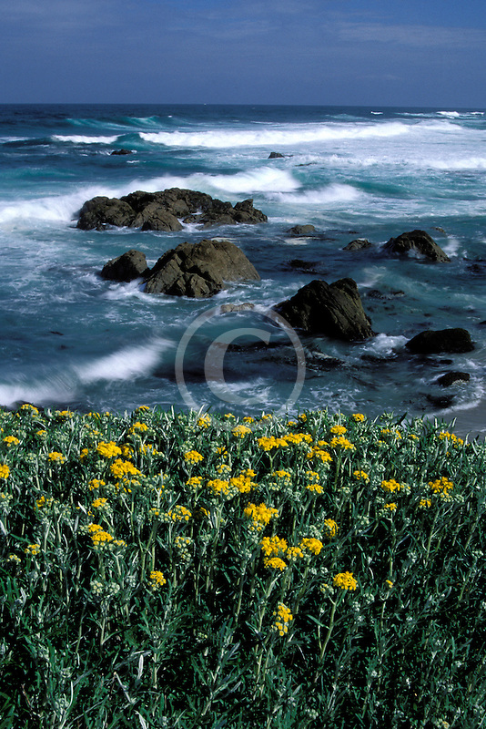 California, Monterey, Beach and flowers, 17 Mile Drive