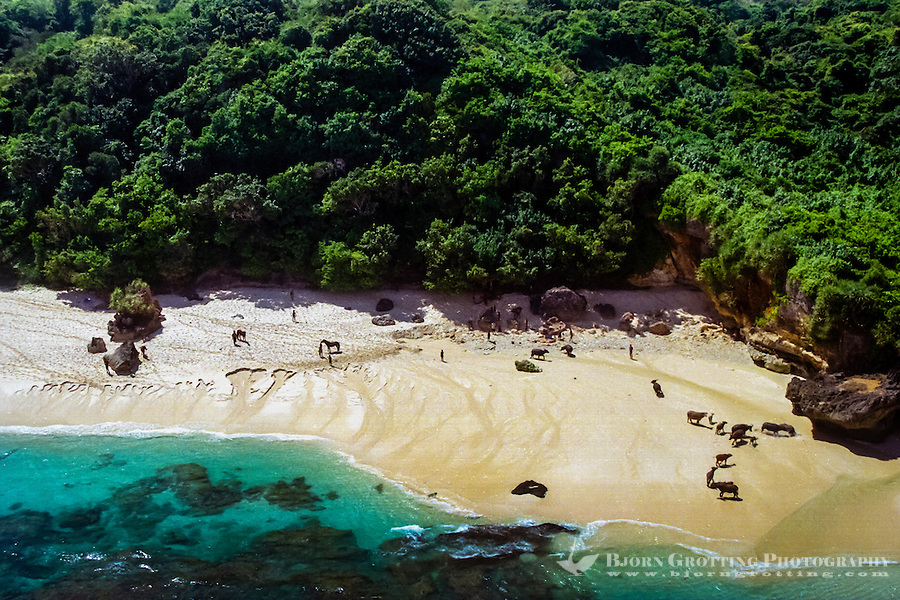 East Nusa Tenggara, Sumba. Horses and cattle on the beach (from helicopter)