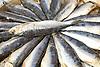 Sardines in round box<br /> <br /> Sardinas en caja redonda<br /> <br /> Sardinen in runder Kiste