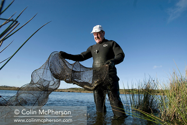 Wearing a wet suit to protect himself from the cold, fisherman David McCreadie examines a traditional fyke net containing freshly-caught eels from the waters of a small inland lake on Anglesey, north Wales, during the fishing season. Once caught, the eels are transferred to tanks before being killed, gutted and prepared for market at Mr McCreadie's Derimon Smokery on the island. With a reported 95 per cent drop in eel numbers across England and Wales, there is concern that this age-old tradition may be under threat.