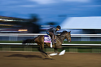 DEL MAR, CA - NOVEMBER 02: Fatale Bere, owned by Leonard Powell , Gerald Benowitz & Mark C. Mathieson and trained by Leonard Powell, exercises in preparation for Breeders' Cup Juvenile Fillies Turf at Del Mar Thoroughbred Club on November 2, 2017 in Del Mar, California. (Photo by Jamey Price/Eclipse Sportswire/Breeders Cup)
