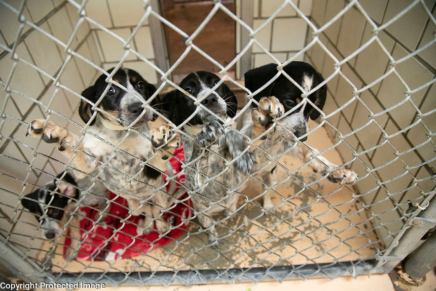 Shelter Medicine and Population class at Starkville animal shelter.