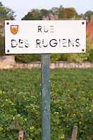 Rugiens sector. Pommard, Cote de Beaune, d'Or, Burgundy, France