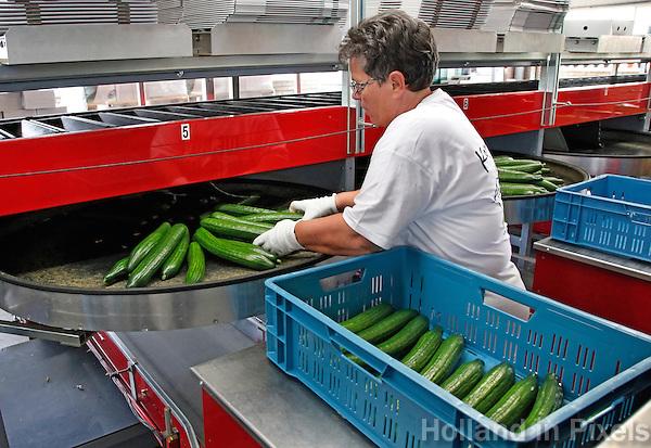 Kom in Kas Open Dag in een komkommerkwekerij  in Nootdorp