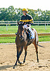 Mineralistic winning at Delaware Park on 10/3/15