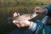NWA Democrat-Gazette/FLIP PUTTHOFF<br /> Small-sized jigs, spoons, crank baits and flies work to catch rainbow trout at the White River below Beaver Dam. Tonkinson shows a trout he caught Dec. 11, 2015 with a woolly bugger fly.