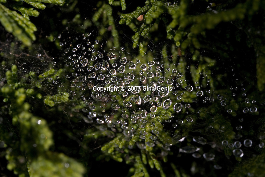 Rain drops on a spider web above leaves