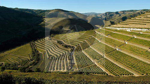 Quinat do Noval, Douro.
