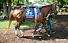 Galiana before The Sweet and Sassy Stakes at Delaware Park on 7/12/14