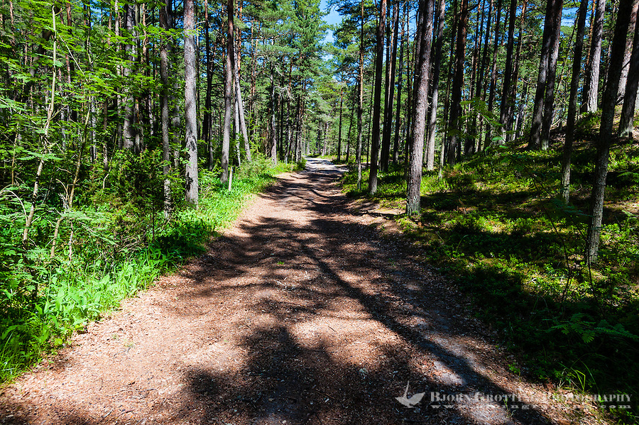 Sweden, Gotska Sandön national park. Road in forest.