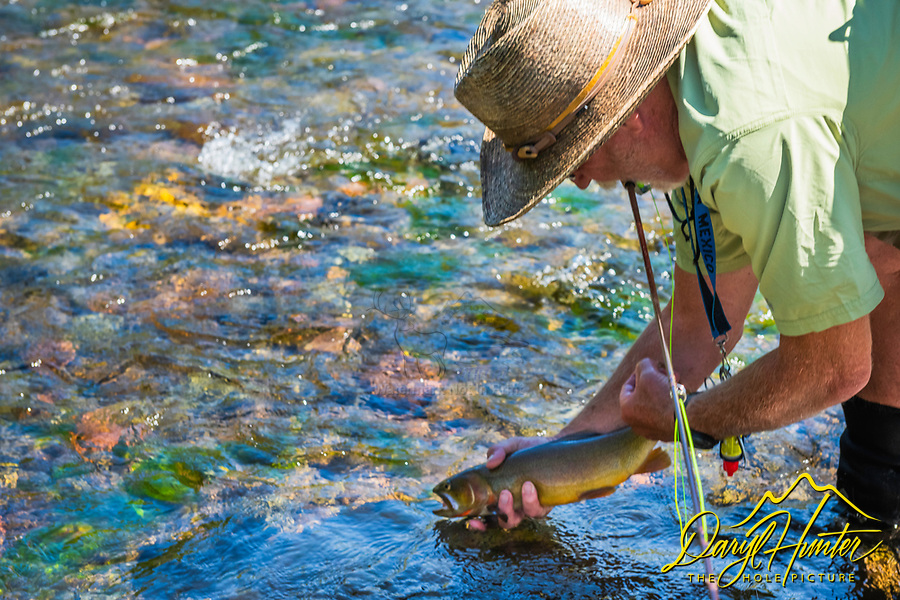 Catch and release, food for the soul.  A fishermen releasing a native cutthroat trout back into a tributary of the Wind River to be caught another day and to perpetuate a troubled species