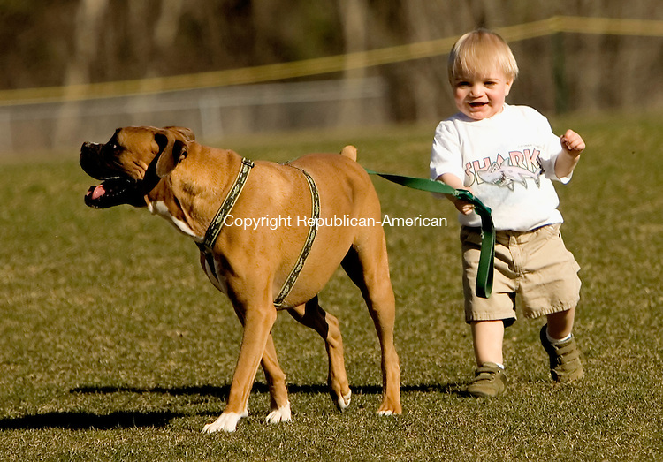 LITCHFILED, CT--20 APRIL 2007--042007JS01- With his parents close by, 17-month-old Ty Szigeti of Litchfiled walks the family dog &quot;Newman&quot; on the soccer field at Litchfield Intermediate School on Friday. The family was at the Litchfiled-Gilbert softball game where Ty's grandfather was an umpire.<br /> Jim Shannon / Republican-American
