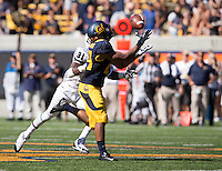 Saturday, September 7, 2013: Khalfani Muhammad catches the ball during a game against Portland State at Memorial Stadium, Berkeley, California - California defeated Portland State 37 - 30