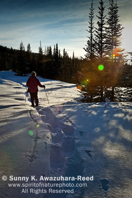 A woman snowshoeing in Togwotee Pass, Bridger Teton National Forest, Wyoming. Back lighting, Late afternoon.