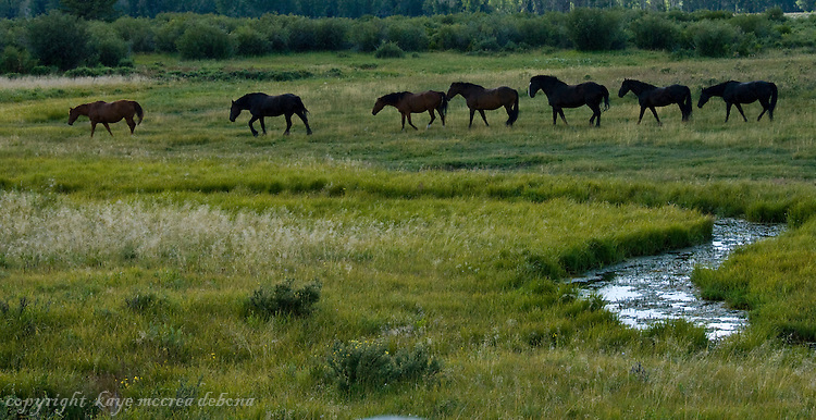 Horse close-ups and landscapes