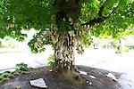 The Wishing Tree in NE Portland, Oregon