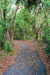 The  Gumbo Limbo Trail traverses through the Paradise Key hammock and offers the visitor a glimpse of a variety of native plants such as Royal Palms, Gumbo Limbo Tree and ferns.