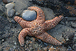 ochre star and stone