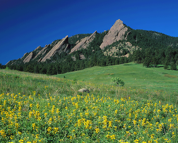 Flatirons rock formation and yellow wildflowers, Chautauqua Park, Boulder, Colorado, USA. .  John leads private photo tours in Boulder and throughout Colorado. Year-round Colorado photo tours.