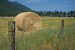 Freshly baled hay sits drying in a field near the Montana Idaho state line. Clarkfork, Idaho.