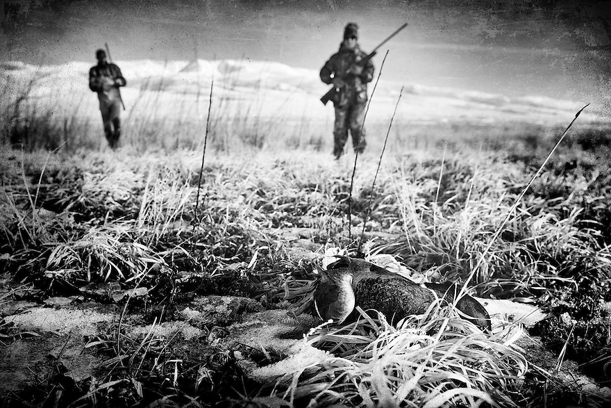 Waterfowl hunters retrieve a drake mallard near Dillon, Montana.