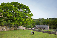 Quaint St Catherine's Church and sheep in field at Boot in Eskdale, Lake District, Cumbria, England