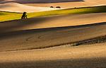 Wheatfields, Palouse, Washington, USA