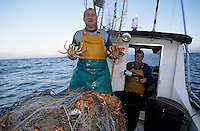 Europe/France/Pays de la Loire/85/Vendée/Ile d'Yeu/Port-Joinville: A la pêche aux araignées avec Marc Turbe (AUTORISATION N°268)